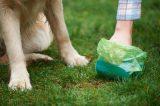 A human picking up dog poop.