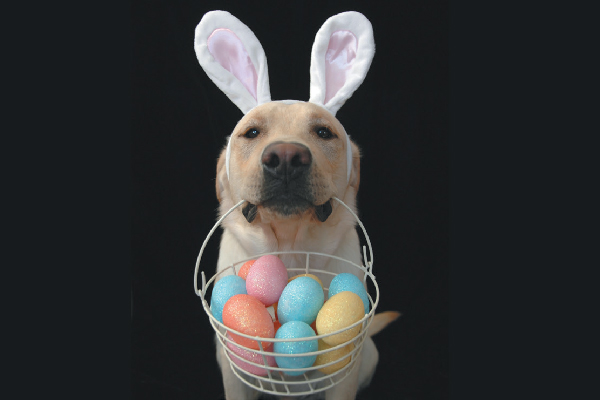 Dog with bunny ears and an Easter basket.