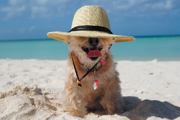 Ella Bean keeps cool in the sun on Aruba's famed white sands.