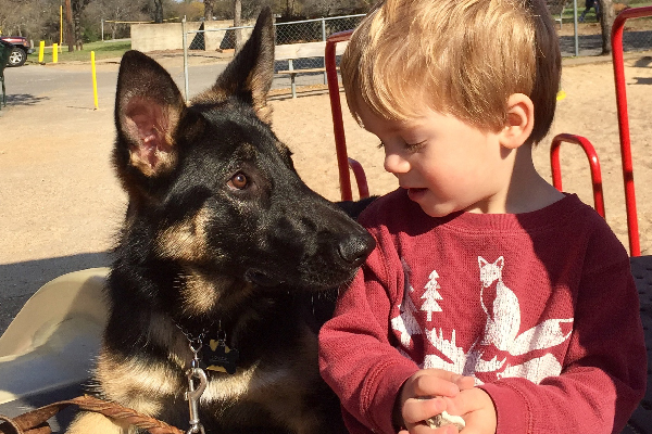 German Shepherd Dog Anya with Lynn Hayner's grandson.