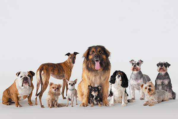 Group of dogs, all different breeds.