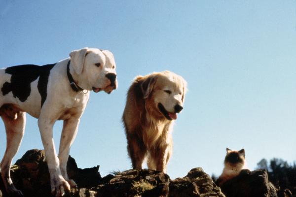 Homeward Bound pets.