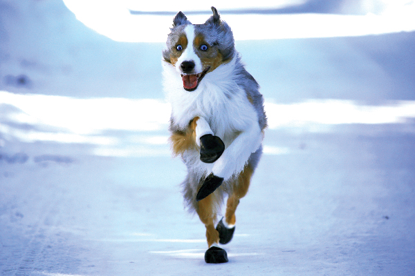 Dug Up at Dogster: 7 Issues to Know About Canine Boots