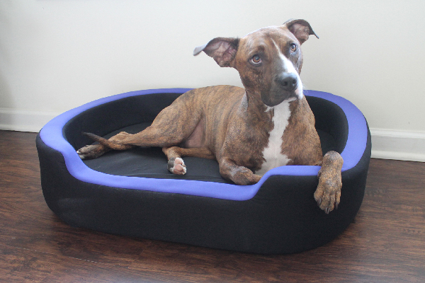 Petrics is a Smart Bed for dogs.