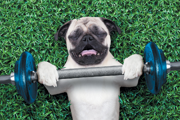 Dog exercise and weight lifting.