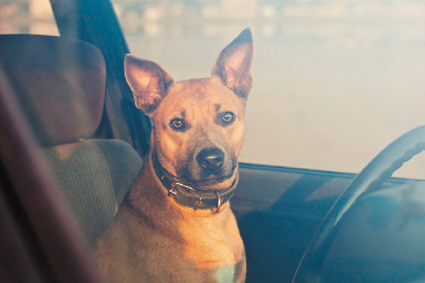 Dog in a hot car.