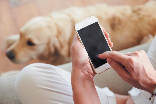 Dog parent on smart phone.