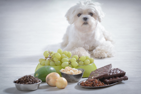 Why Can T Dogs Eat Grapes And Raisins