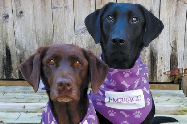 Embrace Pet Insurance Wellness Rewards Program.