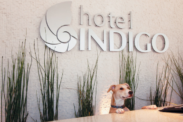 Hotel Indigo is a dog-friendly hotel chain.