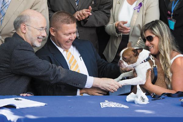 Libre, Boston Terrier, Pennsylvania.