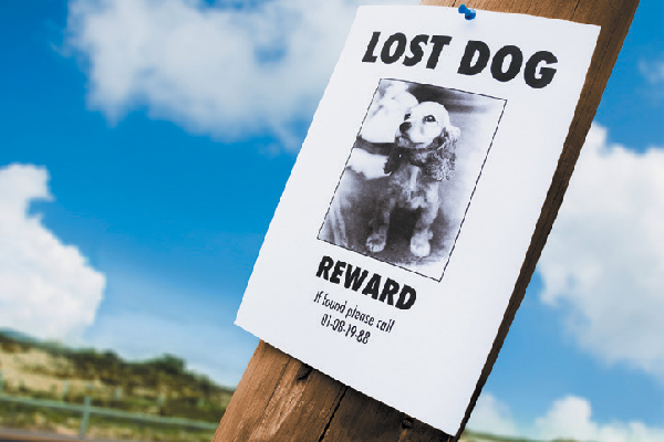 Lost dog poster.