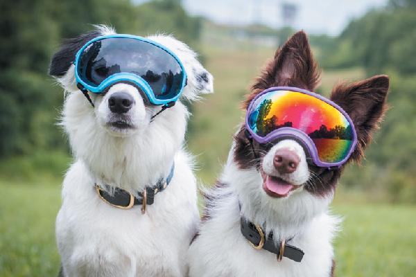 Rex Specs Dog Goggles.