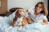Woman and Beagle or hound dog on a hotel bed.