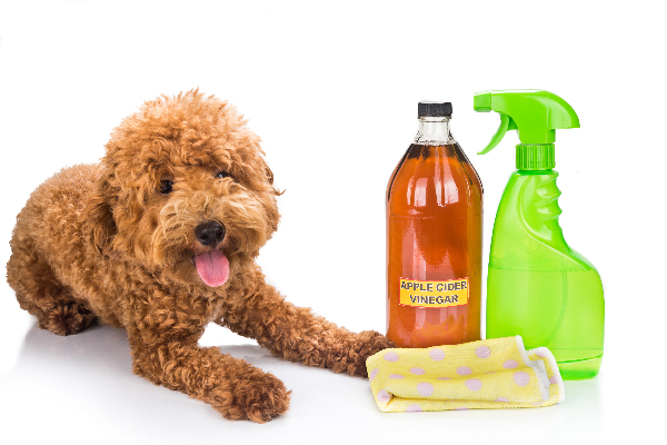 Apple cider vinegar for dogs.