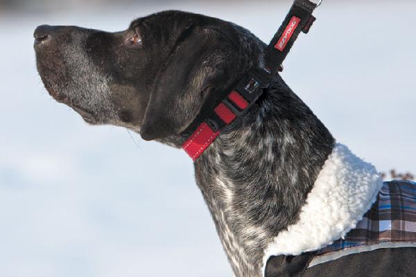 EzyDog Checkmate martingale collar (store.ezydog.com)