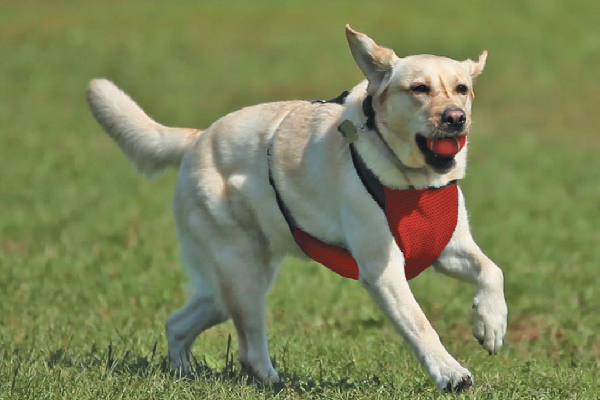 Kumfy Tailz cooling harness (kumfytailz.com).