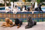 Service dog breeds.