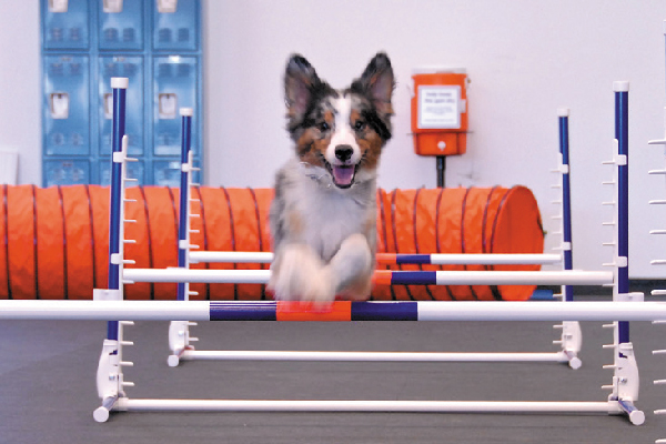 Zoom Room Is an Indoor Gym — For Dogs