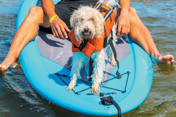 A dog in a life vest on a paddleboard in the water.