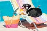 A dog on a beach chair by the pool with sunglasses.