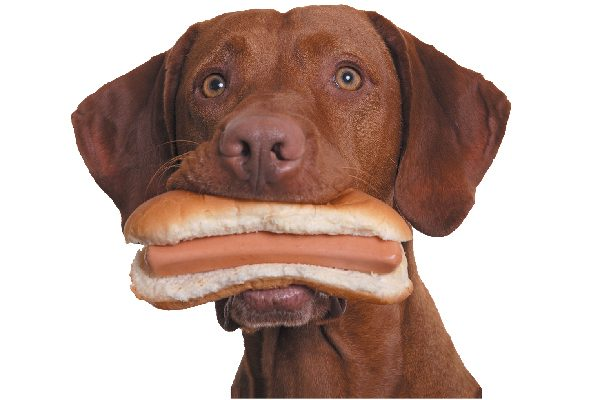 A dog with a hot dog in his mouth.