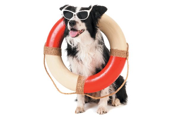 A dog with sunglasses and a life saver on.