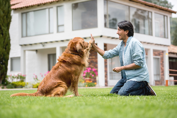 Dog and man high fiving.
