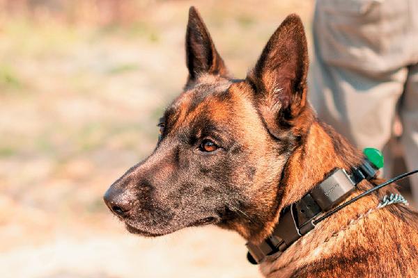 Singita Grumeti Canine Unit.