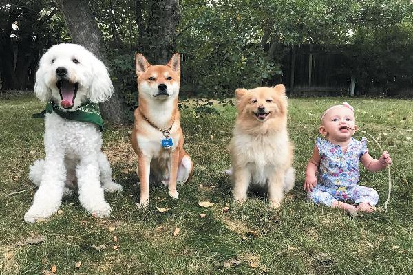 Friends Fur Ever winners — Stinson, Capone, Bear and Neila.