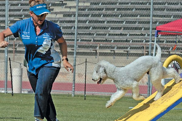 You can research where to train if you are interested in dog agility classes. Photography Courtesy Robert Moray.