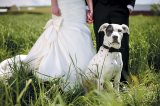 Many people are looking for dog-friendly wedding destinations rather than leaving their pup at home. Photography ©amportraits | Getty Images.