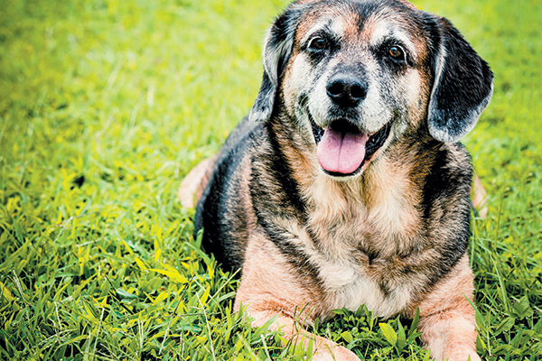 Senior dogs give a whole lot of love. Celebrate Adopt a Senior Dog Month.