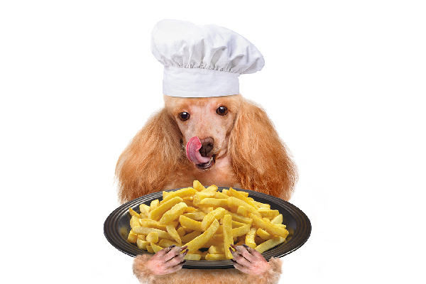 Can dogs eat French fries?
