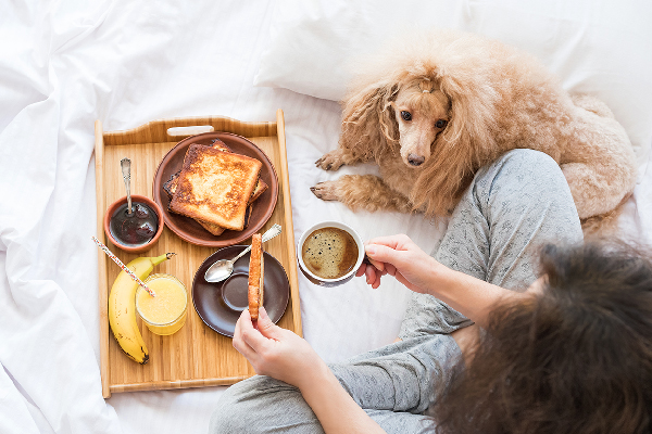 Woman eating room service with dog on the bed.