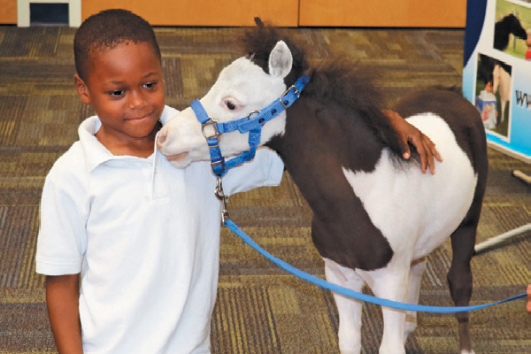 Miniature Horses make wonderful therapy animals. Photography courtesy Gentle Carousel Miniature Therapy Horses.