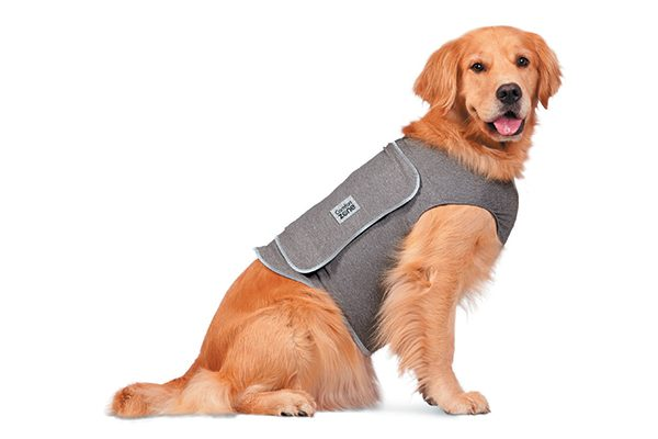 Comfort Zone Calming Vest.