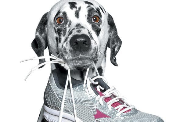 Your dog is helping you get ready for a walk by grabbing your shoes. Photography ©BilevichOlga | Getty Images.