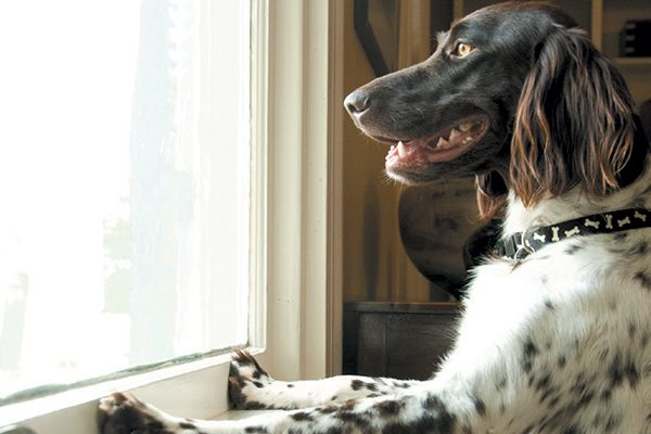 Your dog is jealously watching everyone else on a walk outside. Photography ©mstroz | Getty Images.