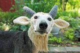 The Gallant Greyhound Etsy Shop has the perfect accessories for your dog.