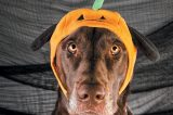 Put the treat back in trick-or-treat by creating a creepy canine holiday. Photography ©Phidophotography.com.