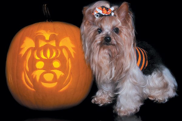 Find a breed-specific stencil for your pumpkin. Photography ©Missing35mm | Getty Images.