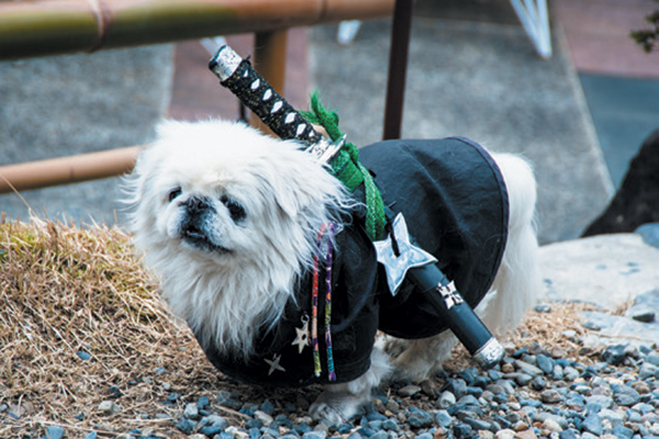 We put together some tips to help you get creative with your dog's costume this Halloween. Photography ©Zinchik | Getty Images.