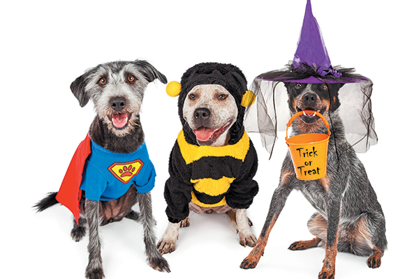Costumes aren't the only way to decorate your dog this Halloween. Photography ©adogslifephoto | Getty Images.