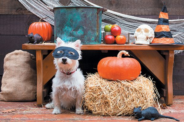 Stock you canine Halloween party with treats for pups. Photography ©peanut_roaster | Getty Images.