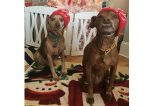 Check out Dogster's listing of December 2018 Dog Events.
