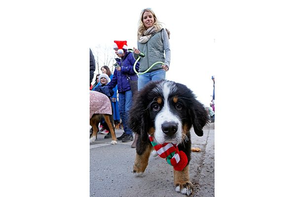 You'll light up at the holiday dog parade in Breckenridge, CO.