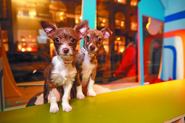 Check out SFSPCA's December 2018 Holiday Windows at Macy's.