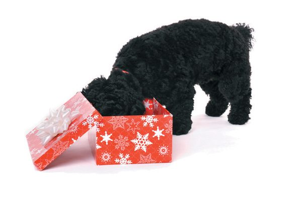Film your dog opening his gifts this season. Photography ©Alexandra Draghici l Getty Images.