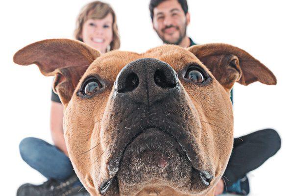 Dogma Pet Portraits is a company located in Costa Mesa, California. Photography Courtesy Courtesy David Capron | Dogma Pet Portraits.